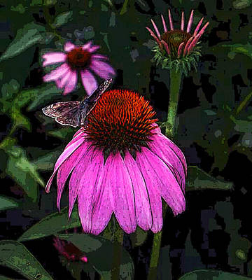 Cone Flower And Butterfly Art Print