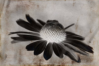 Mixed Media - Cone Flower Art - Loves Me Loves Me Not by Lesa Fine
