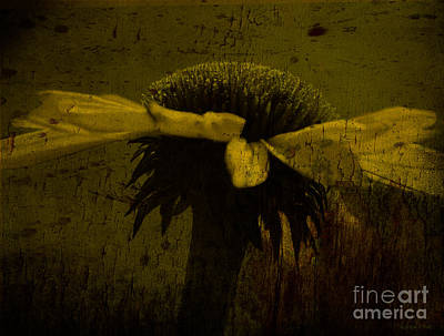 Cone Flowers Photograph - Cone Flower Bw Morning Dew Yellow by Lesa Fine