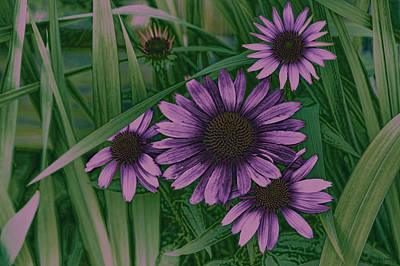 Cone Flower Photograph - Cone Flower Country Purple by Lesa Fine