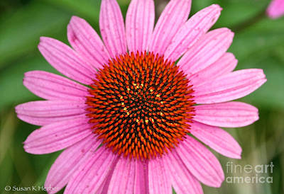 Photograph - Cone Flower Crown by Susan Herber