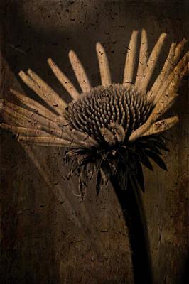 Photograph - Cone Flower Peeling Bud by Lesa Fine