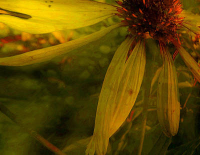 Photograph - Cone Flower Story by Jim Vance
