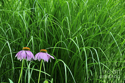 Photograph - Cone Flowers And Grass by David Arment