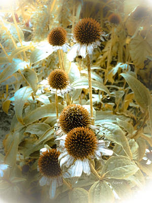 Mixed Media - Cone Flowers by Connie Dye