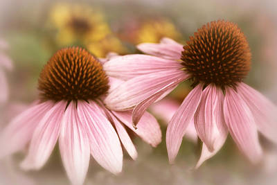 Cone Flowers Art Print by Jessica Jenney