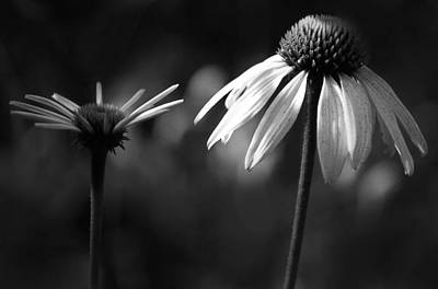 Photograph - Cone Flowers by Jim Vance