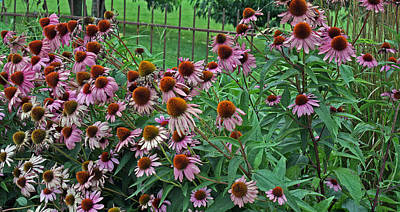 Design Pics - Cone Flowers by Thomas Michael Conner