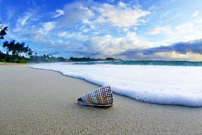 Beach Shell Sand Sea Ocean Photograph - Cone Foam by Sean Davey