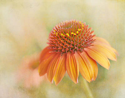Photograph - Coneflower In The Sun by David and Carol Kelly