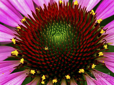 Photograph - Coneflower - Little Yellow Spider by Paul W Faust -  Impressions of Light