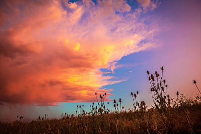 Photograph - Coneflowers And Clouds Glacier National Park Painted  by Rich Franco