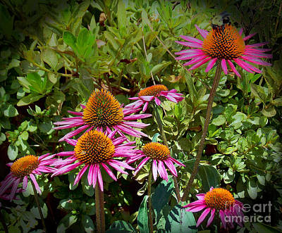 Photograph - Coneflowers by Annette Allman
