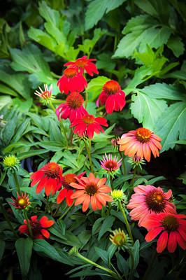 Coneflowers Echinacea Rudbeckia Art Print by Rich Franco