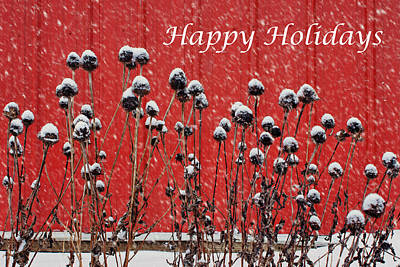 Photograph - Coneflowers In Winter by Nikolyn McDonald