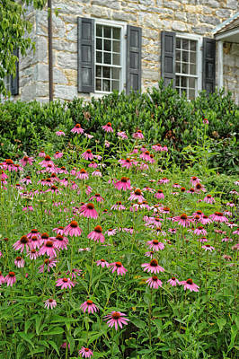 Photograph - Coneflowers by Kelley Nelson