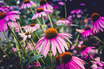 Photograph - Coneflowers by Sara Frank