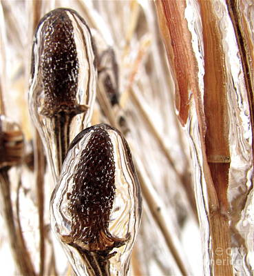 Photograph - Coneflowers Under Ice by Tim Good