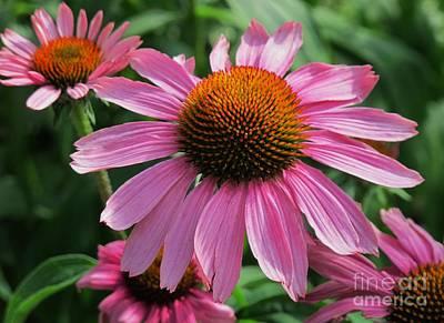 All American - Conehead Daisy Two by Arlene Carmel