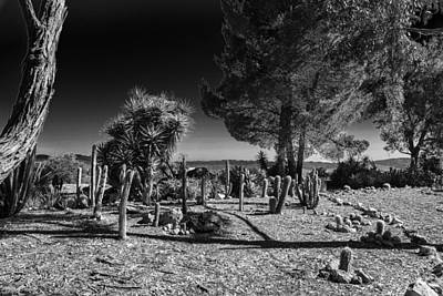 Black White Photograph - Conejo Cactus by Ross Henton
