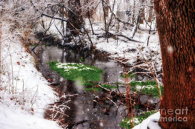 Photograph - Confused Spring Or Winter by Peggy Franz