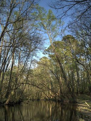 Photograph - Congaree Creek-3 by Charles Hite