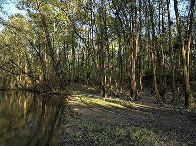 Photograph - Congaree Creek-4 by Charles Hite