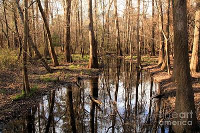 Photograph - Congaree Reflections by Adam Jewell