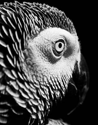 Photograph - Congo African Grey 8 by Paulina Szajek