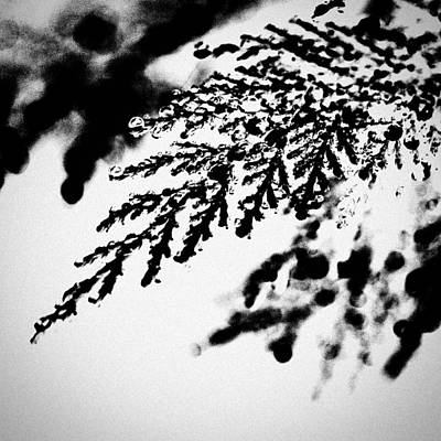 Abstract Wall Art - Photograph - Conifer by Jason Michael Roust