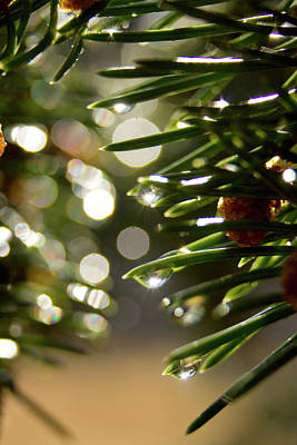 Zamora Photograph - Conifer Needle Close by Eric Zamora