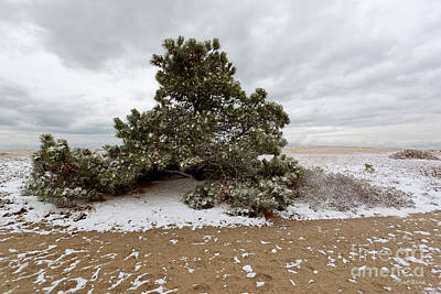 Storm Clouds Cape Cod Photograph - Conifer On A Snowy Cape Cod Beach by Michelle Wiarda