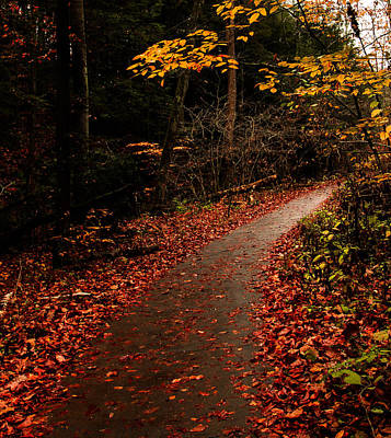 Photograph - Conkle's Hollow Path by Haren Images- Kriss Haren
