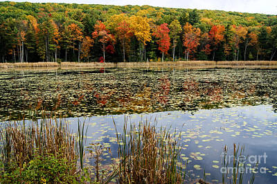 Photograph - Connecticut Fall Reflections by David Birchall