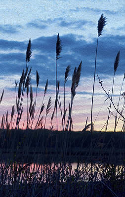 Photograph - Connecticut Sunset With Reeds And Swirls by Marianne Campolongo