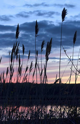 Photograph - Connecticut Sunset With Reeds Series 4 by Marianne Campolongo