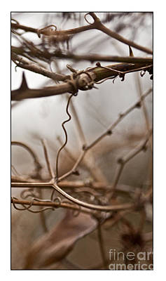 Photograph - Connections In The Mist by Liz  Alderdice