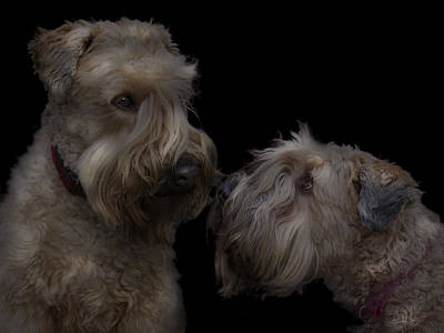 Terrier Digital Art - Conor And Bailey - Puppy Love by Kevin Doty