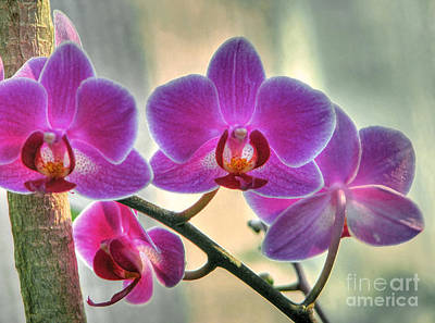 Photograph - Conservatory Orchids by Chris Anderson