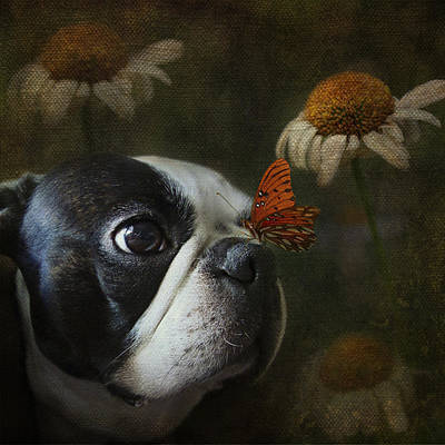 Photograph - Constant Companion by Kathleen Holley