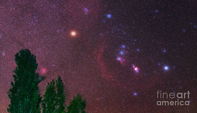 Photograph - Constellation Orion by Babak Tafreshi