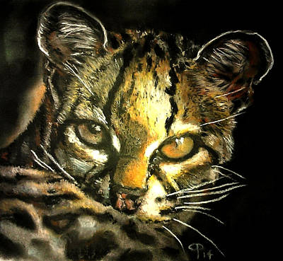 Margay Cat Pastel - Contact - Margay by Charith Pelpola