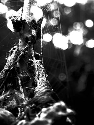 Photograph - Contaminated Web by Tyler Lucas