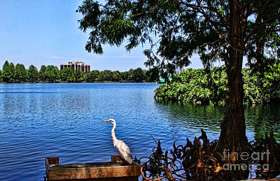Photograph - Contemplating By Lake Eola By Diana Sainz by Diana Raquel Sainz
