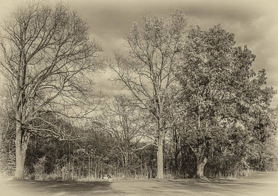 Black Walnut Photograph - Contemplating Life Sepia by Steve Harrington