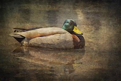 Photograph - Contemplation by Dale Kincaid