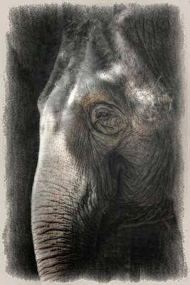 Animals Photos - Contemplation by Joan Carroll
