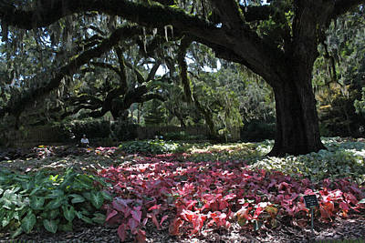 Caladiums Photograph - Contemplation Of A Magnificent Place by Suzanne Gaff