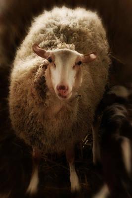 Animal Portraiture Mixed Media - Contemporary Sheep Iv by Doc Braham