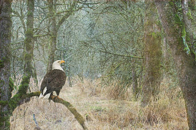 Eagle Photograph - Content And Curious by Angie Vogel